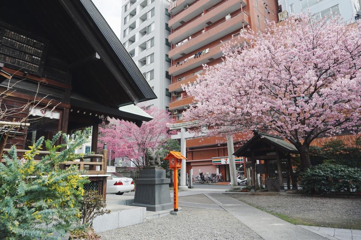The Sakura, Dog and Cat at KuramaeShrine