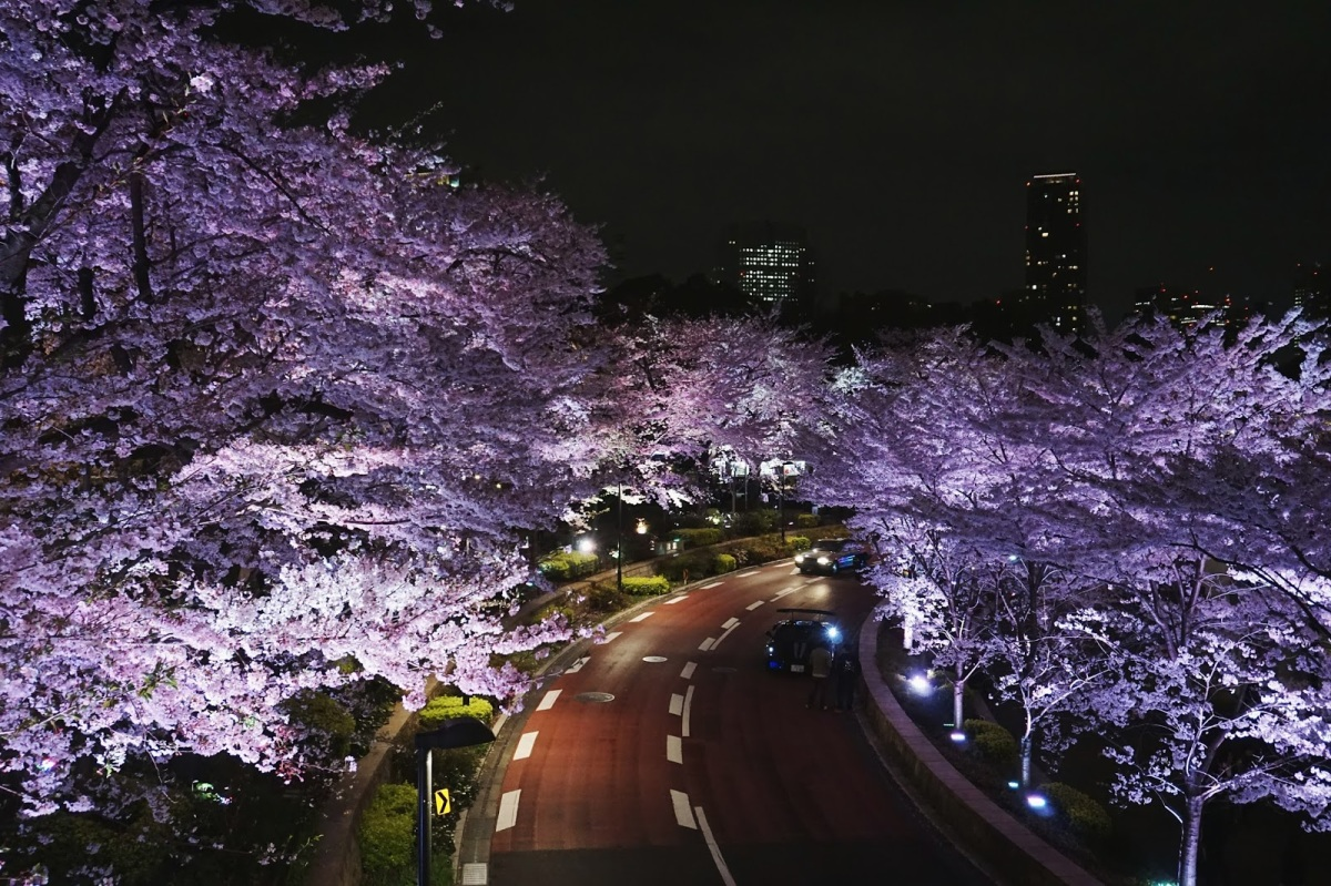 The Night Hanami in TokyoMidtown